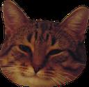 :coolcat: