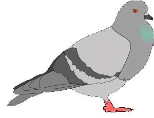 :piccione: